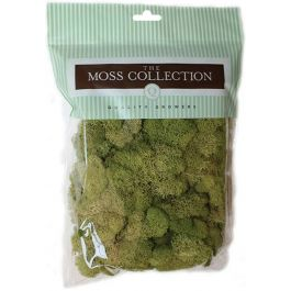 Preserved Reindeer Moss 108.5 Cubic Inches Spring Green - QG2060