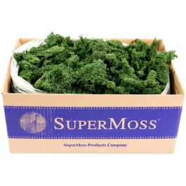 Preserved Reindeer Moss 3Lb Forest - RM3LB-21710