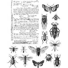 "Tim Holtz Cling Stamps 7""X8.5"" Entomology - CMS-328"