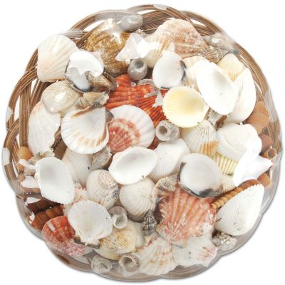 Sea Shell Basket 10