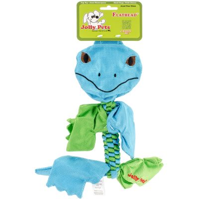 Animal Flathead Small Iguana - SAF-FHI5